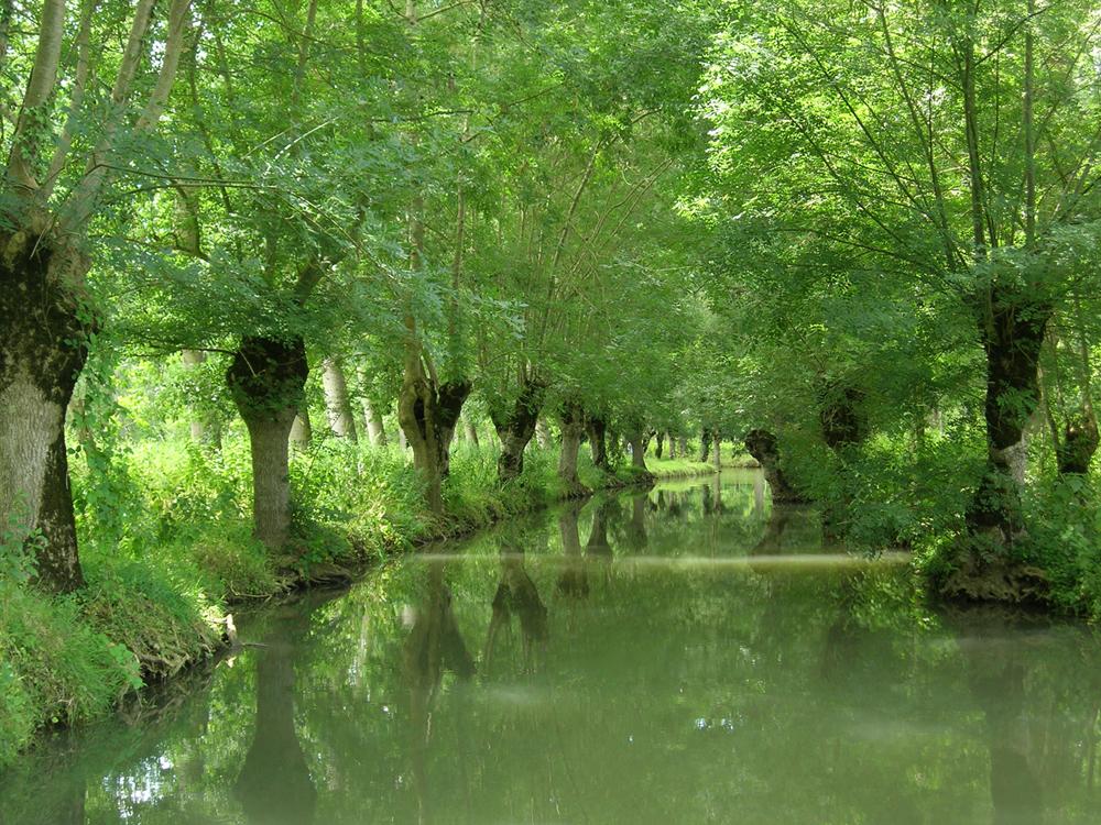 Marais poitevin en barque avec b b les passions de - Magasin deco dans le marais ...
